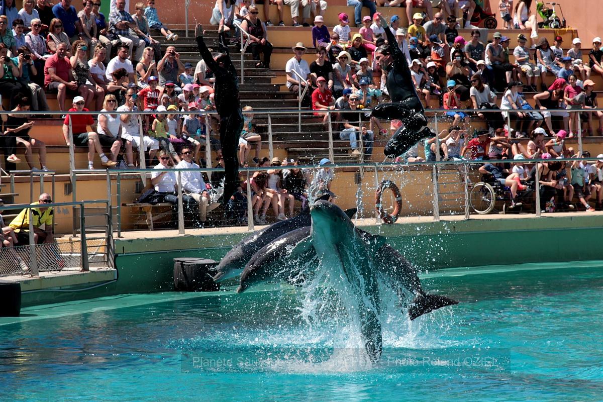 Planète sauvage dauphins